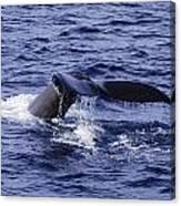 Whale Tail 2 Canvas Print