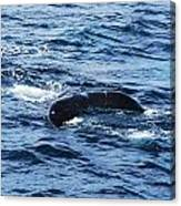 Whale Tail 3 Canvas Print