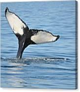 Whale's Tail Canvas Print