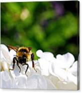 What Are You Looking At Canvas Print