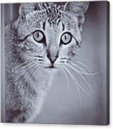 What Eyes You Have Canvas Print