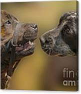 What Lovely Teeth You Have Canvas Print
