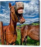 What's So Funny Canvas Print