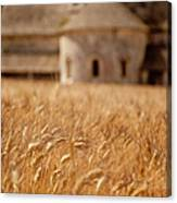 Wheat At The Abbaye Canvas Print