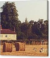 Wheat Field And Geese At Harvest Canvas Print
