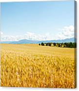 Wheat Field Near D8, Brunet, Plateau De Canvas Print