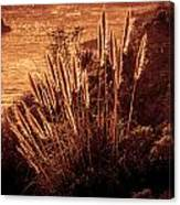 Wheat Grass Canvas Print