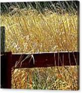 Wheat N' Fence Canvas Print