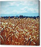 Wheat Reeds Canvas Print