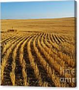 Wheat Rows Canvas Print