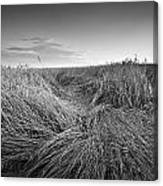 Wheat Waves Canvas Print