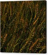 Wheat Waving In The Wind Canvas Print