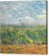 Wheatfield With Lark Canvas Print