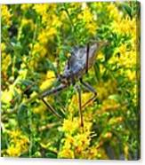 Wheel Bug  Canvas Print