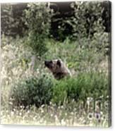 When Bears Dream Canvas Print