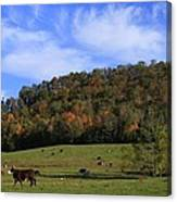 When The Cows Come Home-alabama Canvas Print