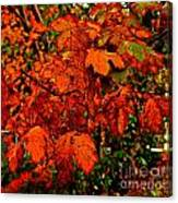 Where Has All The Red Gone - Autumn Leaves - Orange Canvas Print
