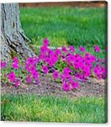Where Petunia Grows Canvas Print