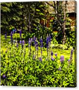Where The Lupines Grow Canvas Print