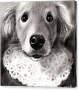 Whimsical Labrador Retriever In A Costume Canvas Print