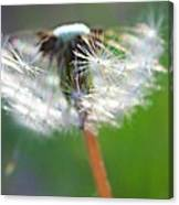 Whimsy Dandelion Canvas Print