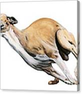 Whippet In The Wind Canvas Print