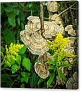 Whirled Turkey Fungus Canvas Print