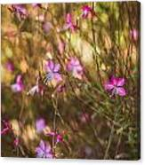 Whirling Butterfly Bush Canvas Print