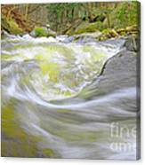 Whirlpool In Forest Canvas Print