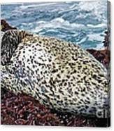 Whiskers And Spots Canvas Print