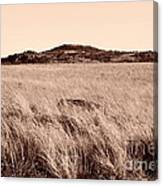 Whispering Fields Canvas Print