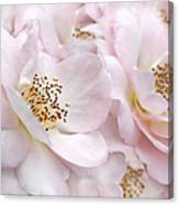 Whispers Of Pink Roses Canvas Print