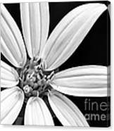 White And Black Flower Close Up Canvas Print