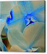 White And Blue Orchid Canvas Print