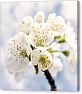 White And Bright - Beautiful Blossoms Canvas Print