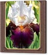 White And Purple Iris Canvas Print