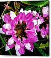 White And Purple Wildflower Canvas Print