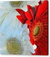 White And Red Flowers Canvas Print