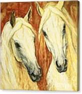 White Arabian Horses Canvas Print