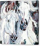 White Arabians Canvas Print