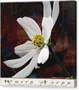 White Aster Study Iv - Titled Canvas Print