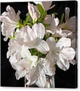 White Azalea Bouquet In Glass Vase Canvas Print
