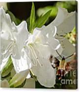 White Azalea With Friend Canvas Print