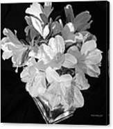 White Azaleas On Black Canvas Print