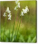 White Bells Canvas Print