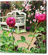 White Bench And Pink Climbing Roses In English Garden Canvas Print