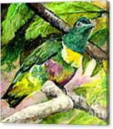 White-bibbed Fruit Dove  Canvas Print