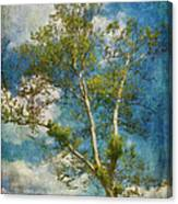 White Birch In May Canvas Print