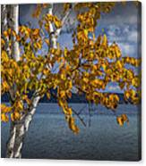 White Birch Tree In Autumn Along The Shore Of Crystal Lake Canvas Print
