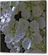 White Blooms Canvas Print